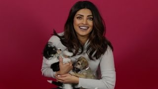 We Surprised Priyanka Chopra With Puppies And Then She Adopted One