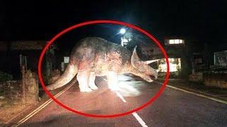 10 مقاطع مصورة يُعْتقد أنها لديناصورات ما تزال حية...!!