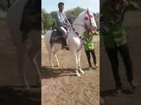 Xxx Mp4 Hasanapura Idar Nagina Najimkhan Baloch 7573832002 3gp Sex