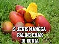 Download Video 9 Jenis Mangga Paling Enak Di Dunia 3GP MP4 FLV