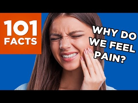 Why Do We Feel Pain? 101