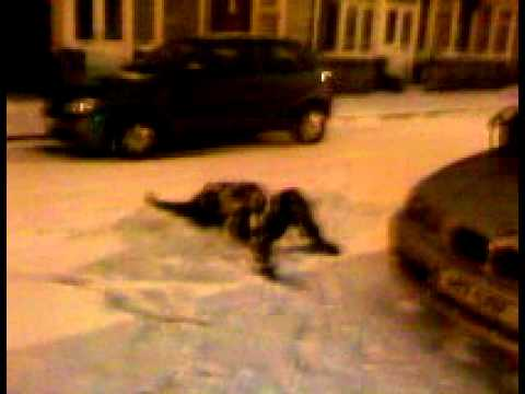 Xxx Mp4 Deana In The Snow And Yes She Falls Over Again Xxxx 3gp Sex