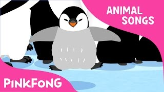 Waddle Emperor Penguin | Penguin | Animal Songs | Pinkfong Songs for Children
