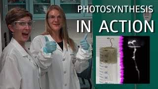 Photosynthesis! Plant Grafting! (Science IRL S3 Ep3)