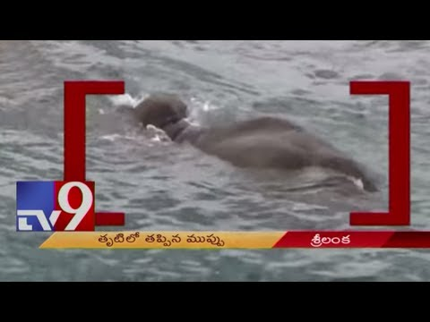 Xxx Mp4 Sri Lankan Navy Rescues Elephant Washed Out On Sea TV9 3gp Sex