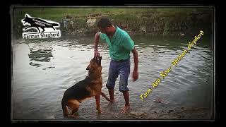 كابتن ابونور / مدرب كلاب البحيرة يستعيد ذكراه مع كلابه منذ زمن بعيد
