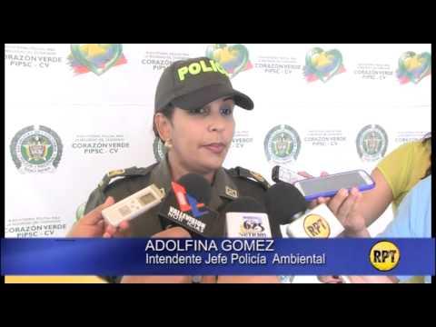 Investigan castración de caballos en Valledupar