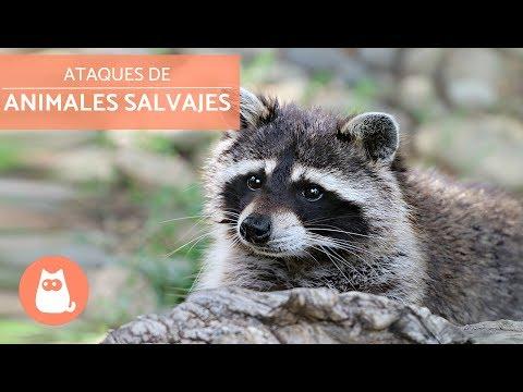 Ataques de animales salvajes Wild Animal Attacks