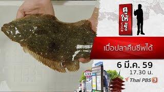 ดูให้รู้ : เมื่อปลาคืนชีพได้ (6 มี.ค. 59)