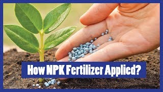 How to Apply NPK Fertilizer to Plants? 2016 ( Urdu/Hindi/English Subtitles )