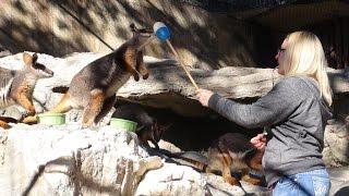 Animal Training for Professionals Workshop