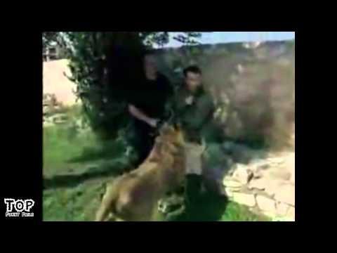 Women vs Animals   FAILS   ATTACKS