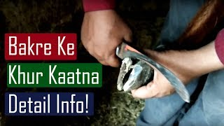 Khur Kaatna - Hoof Cutting! Detail information