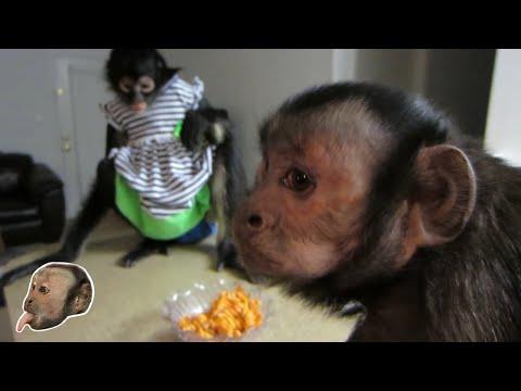 Sexy Monkey Date