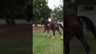 Aprendendo a cavalgar!!!🐎🐴