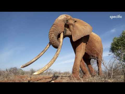 Xxx Mp4 Incredible Pictures Capture Rare 39 Elephant Queen 39 In Kenya UK News Today 3gp Sex