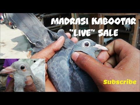Xxx Mp4 Madrasi Baby Quot Live Quot Sale In Howrah Sobuj Amp Kasmiri Colour By Raza Photography Amp Technical 3gp Sex