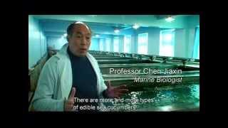 """Culinary China"" Docu Series: ""Heavenly Food"" - Sea Cucumber Snippet"