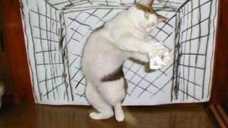 Torwart Katze Rocco