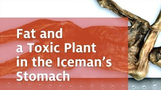 Fat and a Toxic Plant in the Iceman