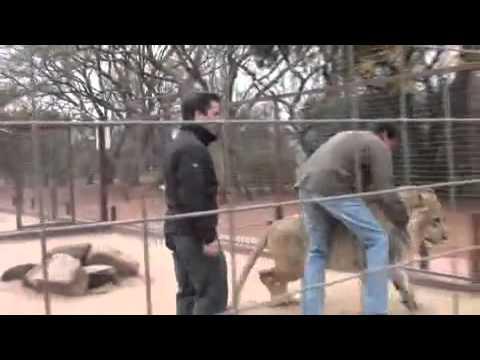 León Ataca a un Reportero