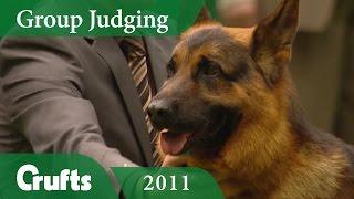 German Shepherd Dog Wins Pastoral Group Judging at Crufts 2011 | Crufts Classics