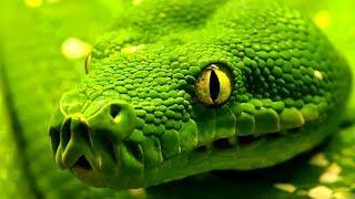 Топ 10 най-смъртоносни змии на света