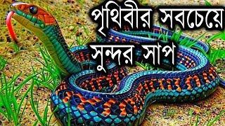 পৃথিবীর সবচেয়ে সুন্দর সাপ || Most Beautiful Snakes In The World || Bengali