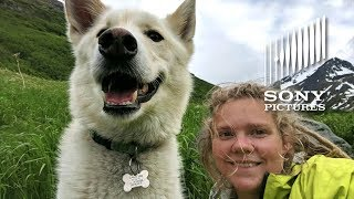 This Amazing Rescue Dog has RESCUED Multiple People | ALPHA