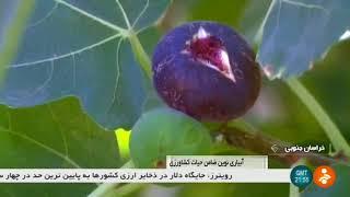 Iran Agriculture Water dispensing, Haji-Abad study field, Birjand آبياري كشاورزي حاجي آباد بيرجند
