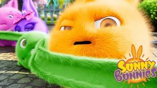 Cartoons for Children   Sunny Bunnies THE SUNNY BUNNIES LONG EAR BUNNY   Funny Cartoons For Children