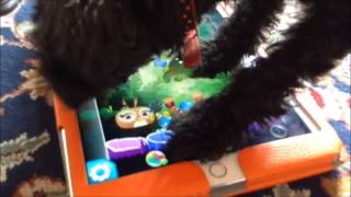 OLD: Dog Plays Angry Birds Stella POP!