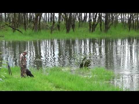 Xxx Mp4 CKC Senior Hunt Test Water Double 3gp Sex