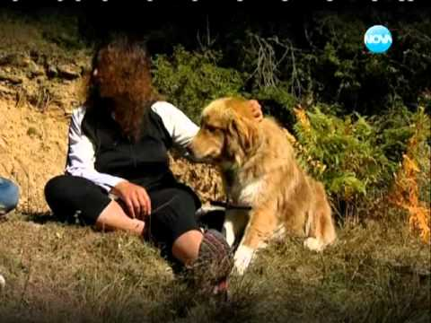 Темата � а Нова Българско овчарско куче