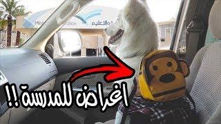 أول يوم دراسي لكلبتي روز 🎒 !!