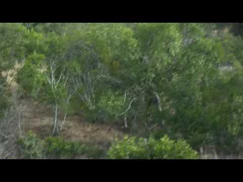 Xxx Mp4 GSC 0758 Our Third Leopard Sighting Shawn Silmiya Hendricks 3gp Sex