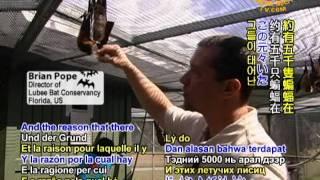Lubee Bat Conservatory - Saving the Endangered Fruit Bat (3/3)