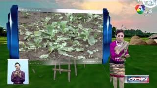 ช่อง 7 HD : ข่าวภาคค่ำช่วงที่ 2 และฝนฟ้าอากาศ (2 พ.ค. 57)