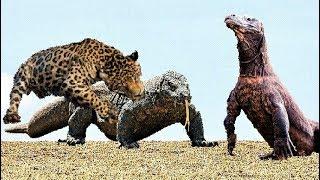 배고픈 표범 VS 거대한 도마뱀