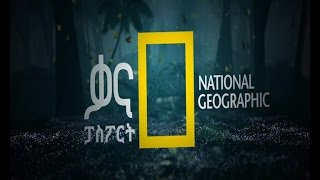 ናሽናል ጂኦግራፊ -Nat-Geo Season 1, Episode 32 | የአሳ አርበኞች ፣ ሕያው ደይኖሰሮች