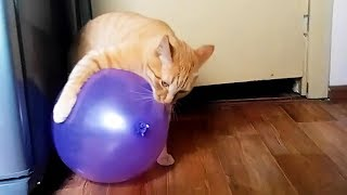CATS VS BALLOONS (Part 2) ★ Cat Reaction to Balloons [Funny Pets]