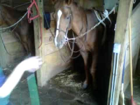 Xxx Mp4 Fist Pumping Horse 3GP 3gp Sex