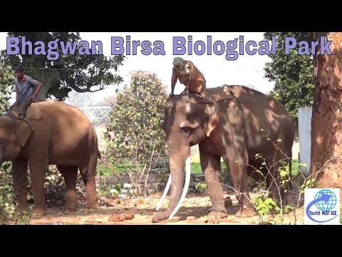 Xxx Mp4 Bhagawan Birsa Biolagical Park Ranchi Jharkand 3gp Sex
