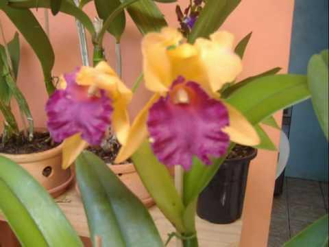Vania orquideas