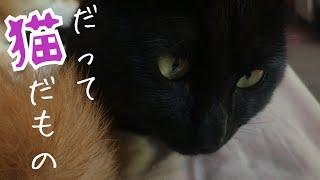 【猫】起きた!いやまた寝るんかーい (ノ_ _)ノ Cat sleep a lot