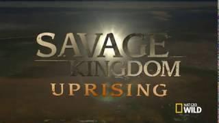 Savage Kingdom Uprising Season 2 Episode 1 CATS WILDLIFE PUBLIC DOMAIN