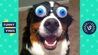 Funny Animals Videos Compilation 2018 - Best Pet Videos | Funny New Vines V2