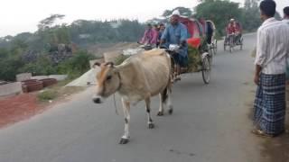 গরুর রিক্সা