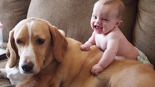 Cute Cats and Dogs Love Babies Compilation 2014