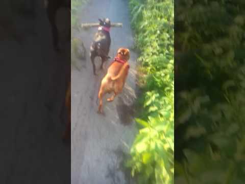 Xxx Mp4 Dog Work Xxx 3gp Sex
